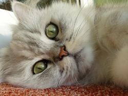 cat-losing-her-hair
