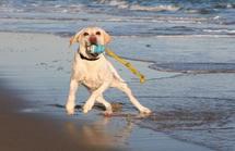 dog-activities