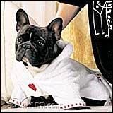 dog-after-bath-image