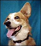 dog-barking-interpretation