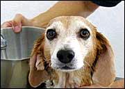 dog-bath-image2