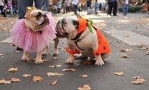 dog-sick-for-halloween