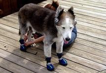 dog's-paws-image1