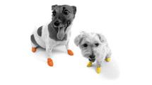 dog's-paws-image2